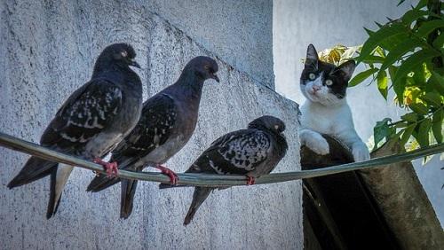 鳩 食べる 鳥 動物