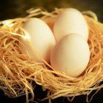 鳩の卵は食べられる!?その味とは!?