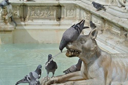 鳩 人 襲う