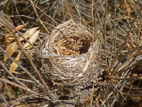 鳩 巣 駆除 法律