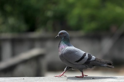 鳩 巣 期間