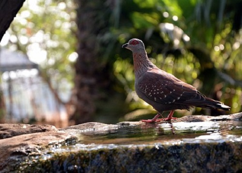 鳩 保護 餌