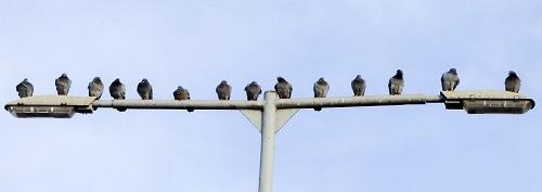 鳩 巣 卵 撤去