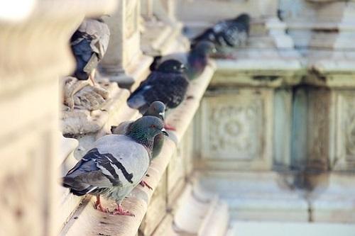 鳩 足 タグ 青 緑