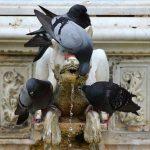 鳩の生態と鳩の卵