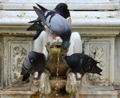 鳩 卵 孵化 温度