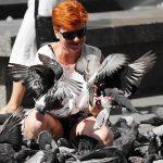 鳩は本当に人を覚える能力があるの?