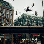 鳩は冬の間はどこで暮らしているの?