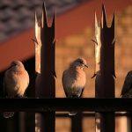 効果的に鳩を寄せつけなくするためのテグス設置方法とは?