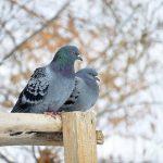 鳩の巣と鳴き声と時間について