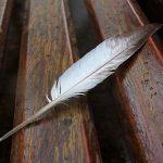 飛び立つ時に鳩の羽から飛び散る菌とは?