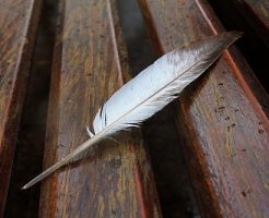 鳩 飛び立つ 菌 羽