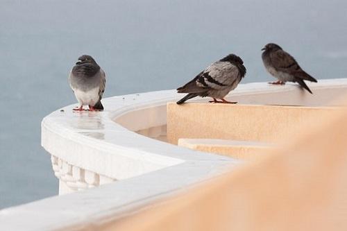 鳩 羽 抜ける