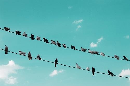 鳩 糞害 習性