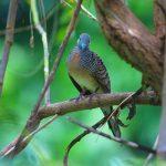 鳩の特徴と鳥の孵化について