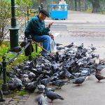 鳩にパンを与えてはいけないの?鳩とそのうの関係とは?