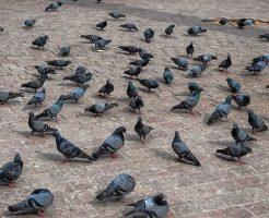 鳩 糞 感染症 肺炎
