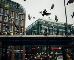 鳩 冬 どこ