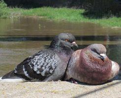 鳩 卵 臭い
