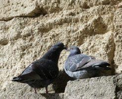 鳩 巣 時期