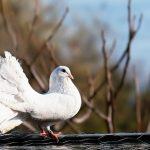 鳩の雛の飼育と温度について